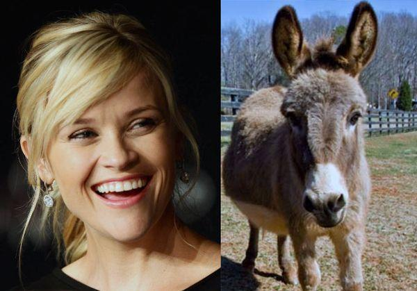 Reese Witherspoon and her donkeys